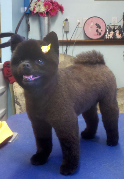 Cute Photos Of Happy Clients Laurel S Pet Grooming